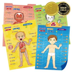 Educational Human Anatomy Talking Toy